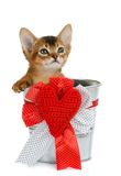 Valentine theme kitten sitting in a silver bucket Royalty Free Stock Photo