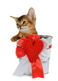 Valentine theme kitten sitting in a silver bucket Royalty Free Stock Image