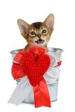 Valentine theme kitten sitting in a silver bucket Stock Images