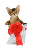 Valentine theme kitten sitting in a silver bucket Royalty Free Stock Photography