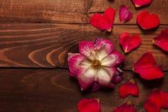 Valentine theme Stock Photography