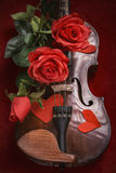 Valentine violin with red roses Royalty Free Stock Photo