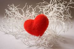 Valentine white branch with heart Stock Photos