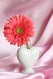 Valentiner eller fostrar daggåvan - lagerföra fotoet Arkivfoton