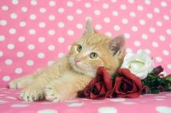 valentines роз котят дня Стоковая Фотография RF