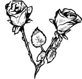 valentines роз Стоковое Фото