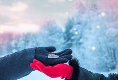 valentines сердца дня предпосылки венчание сети шаблона страницы приветствию карточки предпосылки всеобщее Стоковые Фотографии RF