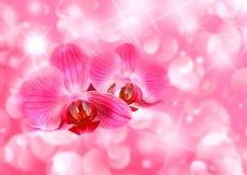 valentines карточки Стоковое Фото