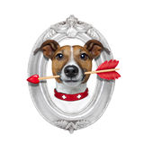 Valentines arrow dog in frame Royalty Free Stock Photos