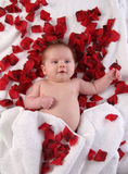 Valentines Baby Royalty Free Stock Photography
