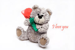 Valentines Bear. Grey Teddy bear, holding red rose, with text I love you Royalty Free Stock Photos