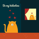 Valentines cat roof serenade Stock Photos