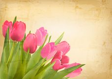 Valentines day background. Beautiful tulip flowers Stock Image