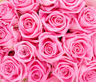 Valentines day background with pink roses Royalty Free Stock Photography