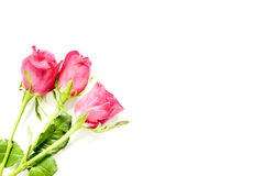 Valentines day background with pink roses. With copy space, selective focus Royalty Free Stock Photography