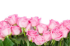 Valentines day background with pink roses Stock Image