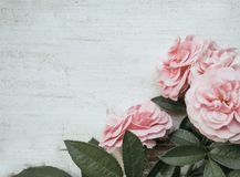 Valentines day background with pink roses over wooden table. Rustic, romantic. royalty free stock images
