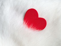 Valentines day background with red heart on white cat hair. Valentines day card. Love and Valentine concept Royalty Free Stock Images