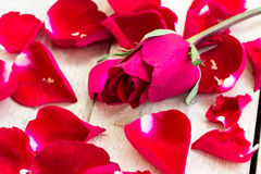 Valentines day background with red roses on wood Stock Images
