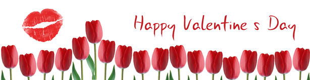 Valentines Day banner with tulips Royalty Free Stock Photography