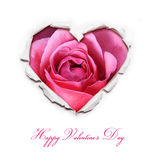 Valentines Day Card. Paper Hole Ripped in shape Heart. With Hot Pink Rose inside Stock Photo