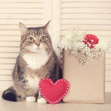 Valentines day cat Royalty Free Stock Images