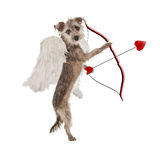 Valentines Day Cupid Dog. A cute little terrier dog dressed as a St. Valentine's Day cupid holding a bow and arrow that has a heart tip stock photo