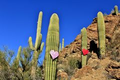 Valentines Day in the Desert Stock Photos