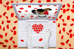 Valentines day dog, dating online on a chat. Dog office worker in  love on happy valentines day,  typing in a  pc computer laptop,   on desk  background,full of Stock Images