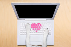Valentines day dog, dating online on a chat. Dog office worker in  love on happy valentines day,  typing in a  pc computer laptop,  isolated on desk  background Stock Photo