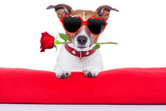 Valentines day dog royalty free stock images