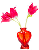 Valentines Day flowers in heart shaped vase on white background. Three red tulips in red heartshaped glass vase isolated on white stock images