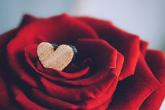 Valentines day greeting card, background. Small wooden heart in the petals of luxurious red velvet rose. Elegant deluxe red rose royalty free stock image