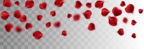 Red rose petal transparent background. Valentines Day greeting card. Valentine`s floral poster. Valentine symbol. Random falling petals. Isolated greeting frame royalty free illustration