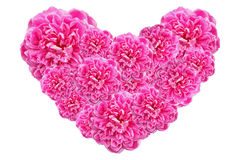 Valentines Day Heart Made of Pink Roses Isolated on White Background Stock Photography