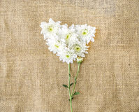 Valentines Day Heart Made of white chrysanthemum on canvas backg. Round Royalty Free Stock Photo
