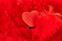 Valentines Day. Hearts red Couple on feathers background. Love concept Stock Photos