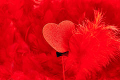 Valentines Day. Hearts red Couple on feathers background. Love concept Royalty Free Stock Photos