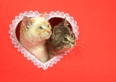Valentines day kittens with copy space Stock Photo