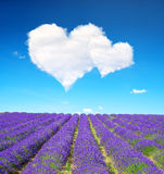 Valentines day. Lavender flower blooming scented fields and blue sky with a white clouds in the form of heart. Valentines day Stock Images