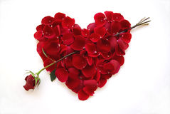 Valentines Day Red Heart with Rose Arrow Royalty Free Stock Photography