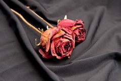Valentines Day Rose Royalty Free Stock Photos