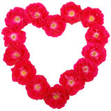 Valentines Day Rose Heart Royalty Free Stock Image