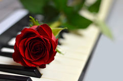 Valentine's Day rose and piano keys. Close up Stock Photo