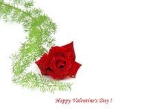 Valentines day rose Stock Photo
