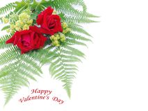 Valentines day rose Stock Image