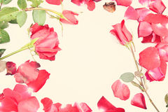 Valentines day with Roses and hearts background Stock Image