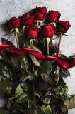 Valentines day womens mothers day red rose with ribbon gift surprise Royalty Free Stock Image