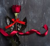 Valentines day womens mothers day red rose with ribbon gift surprise Royalty Free Stock Photo