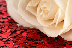 Valentines decoration of white rose Stock Photos